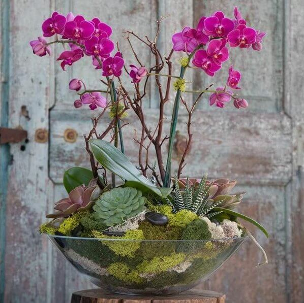 Выращиваем орхидеи