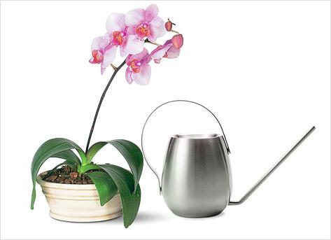 Как поливать орхидею поле пересадки
