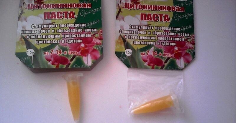Как вырастить орхидею из цветоноса: практические советы