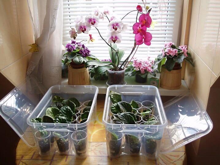 Как вырастить орхидею из семян в домашних условиях