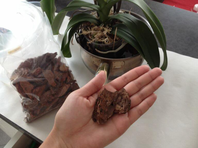 можно ли пересадить орхидею во время цветения