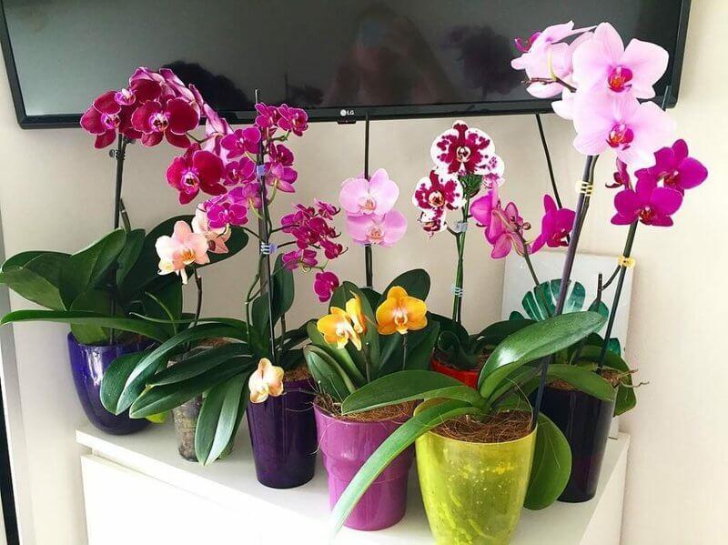 Чем поливать орхидею чтобы она всегда цвела