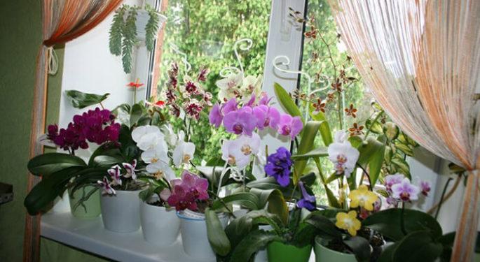 Как помочь орхидее выжить в трудной ситуации