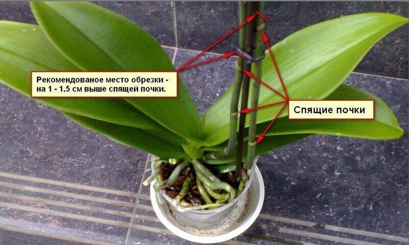 Орхидея уход в домашних условиях после цветения