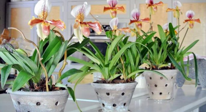 Орхидея – уход в домашних условиях после покупки