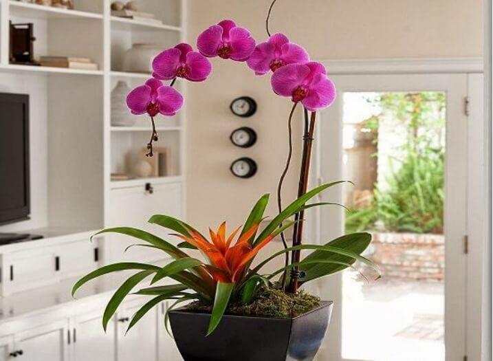 Почему трескаются листья у орхидеи