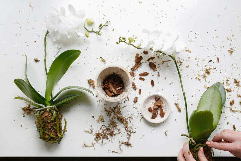 Чем опасна посадка орхидеи в обычную землю