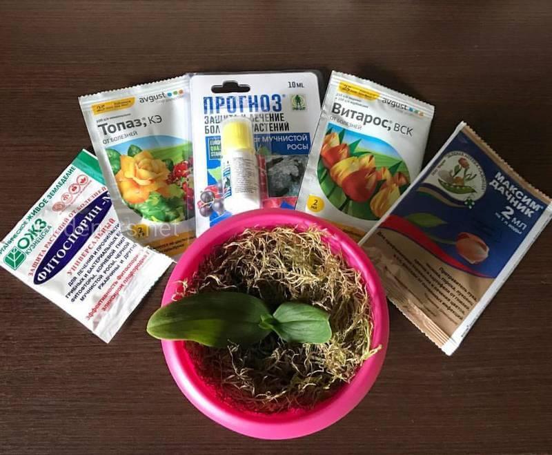 Фунгицид для орхидей