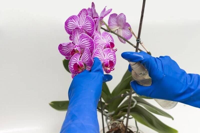 Фузариоз на орхидеях