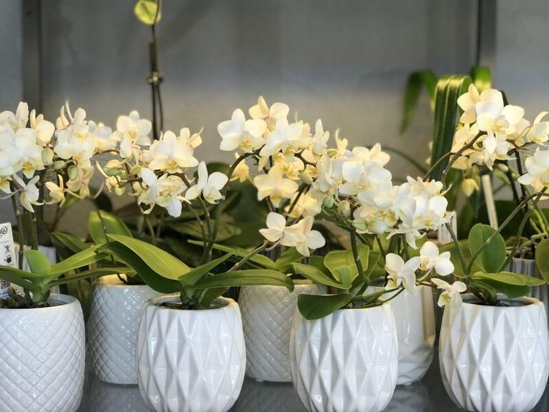 Мини орхидеи