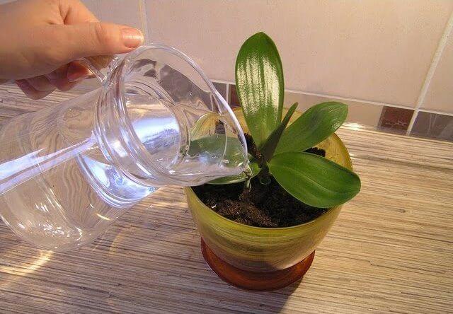 Янтарная кислота показания к применению для орхидей