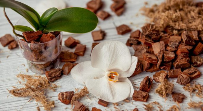 Использование коры для орхидей