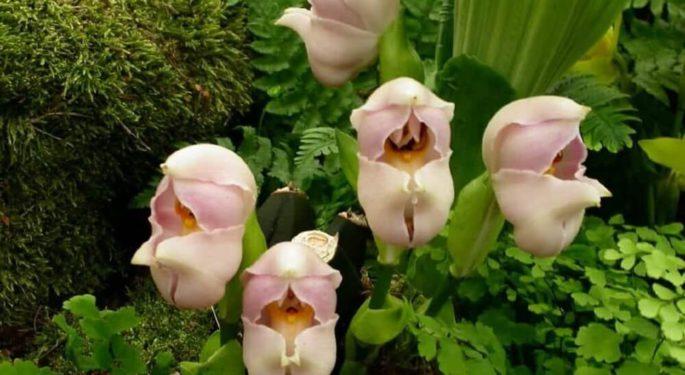 Самые редкие орхидеи в мире