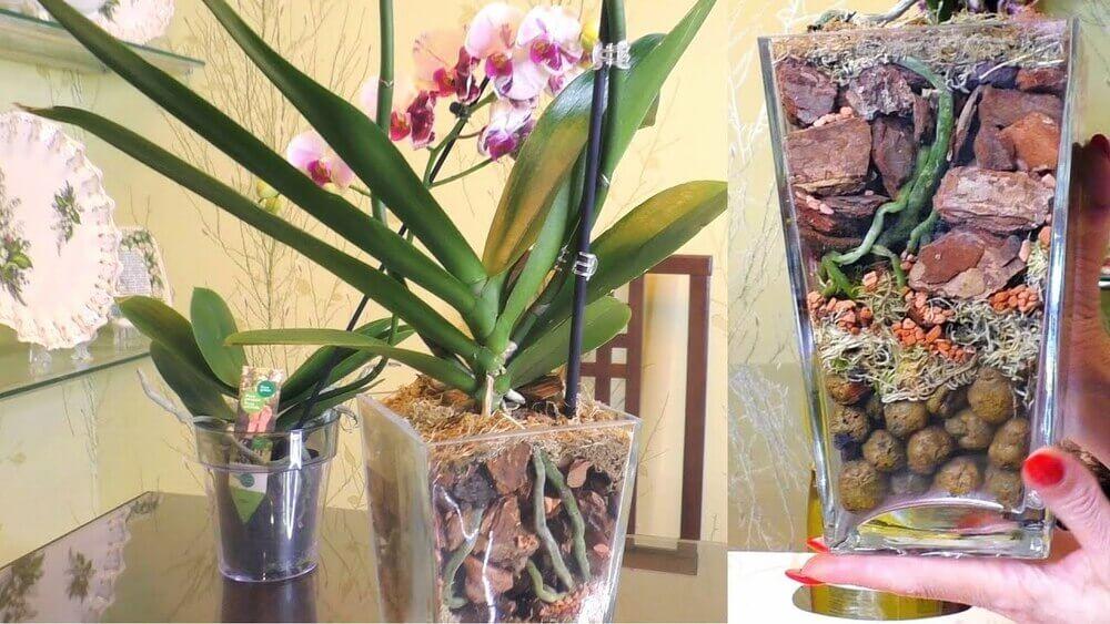 Выращивание орхидей в закрытой системе