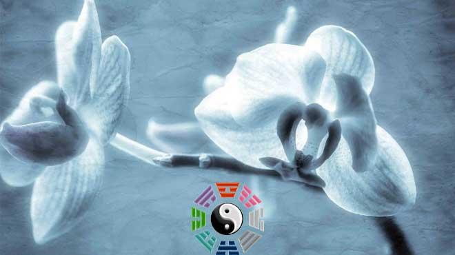 Что символизирует орхидея