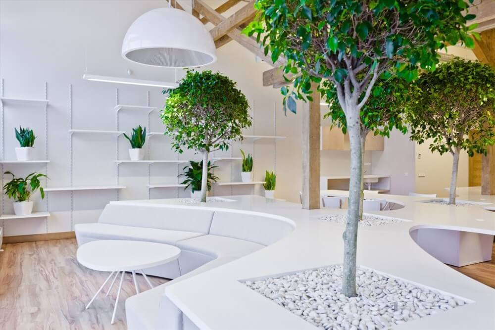 Растения в современном дизайне интерьера