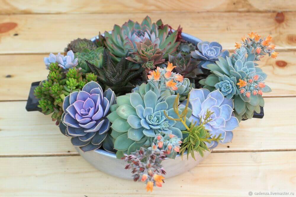 Яркий мир комнатных растений
