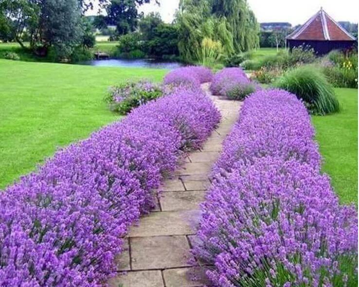 Душистые и ароматные цветы для сада