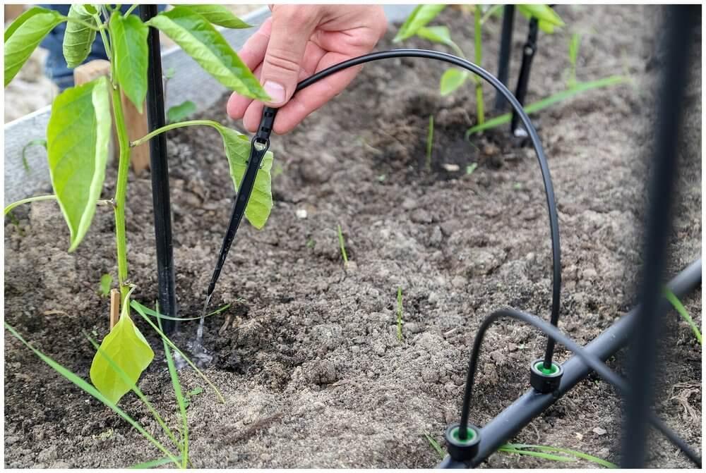 Борьба с сорняками в саду и огороде