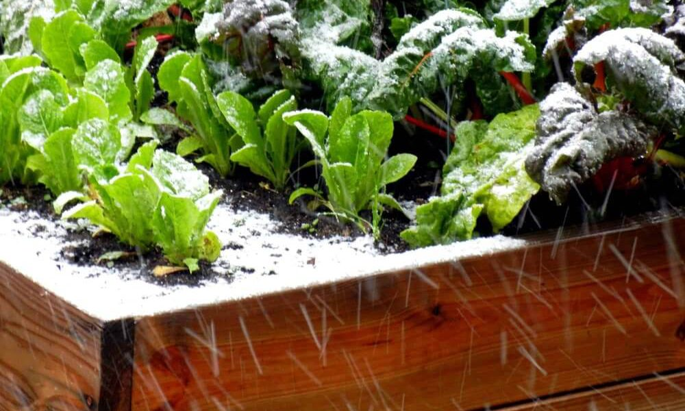 Оттепель в начале зимы: важные работы в саду и огороде